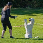 "Image for ""Musical canine freestyle competition"""